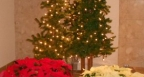 christmas-2011-011
